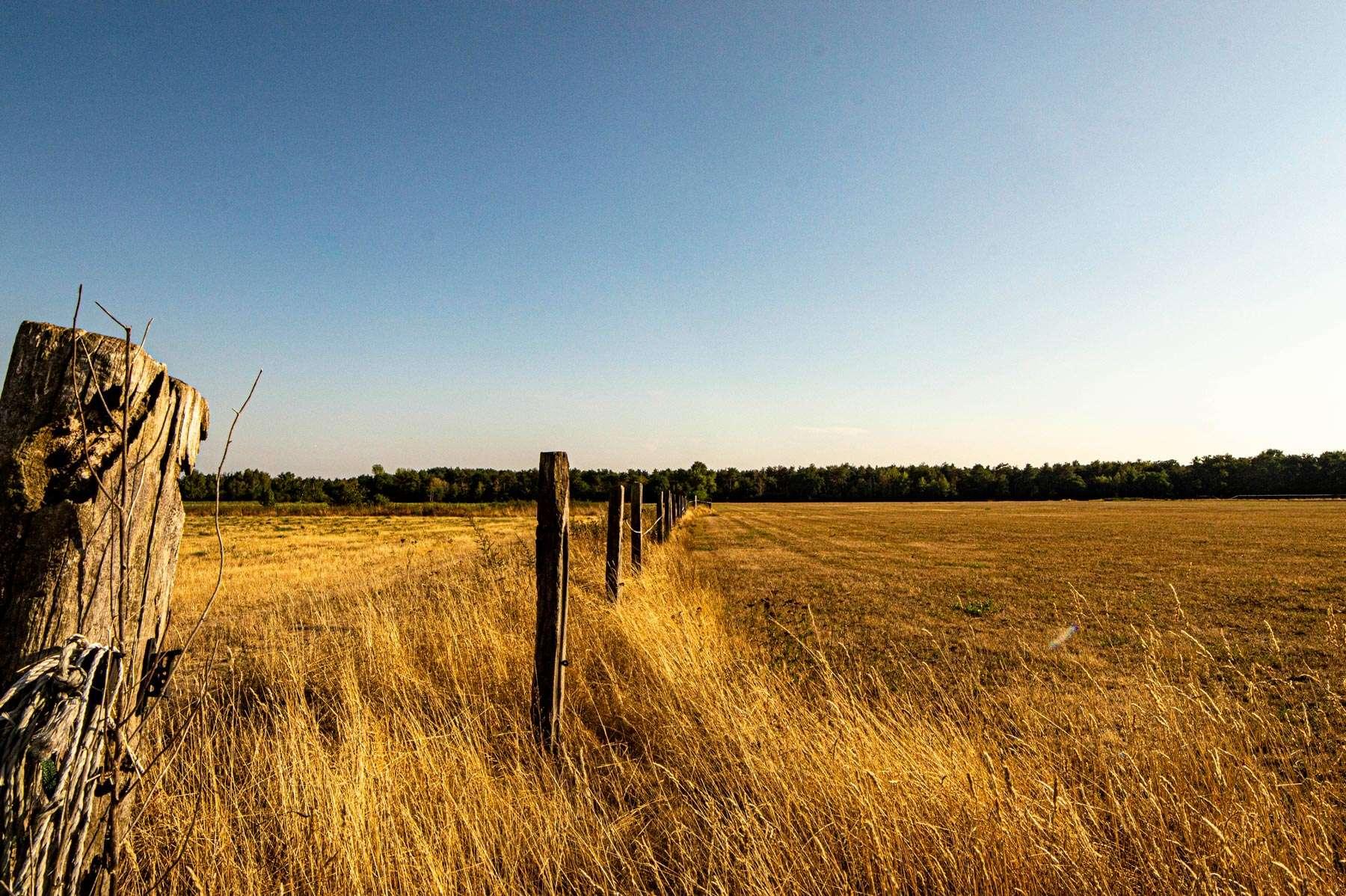 Trockenes Feld am Waldrand