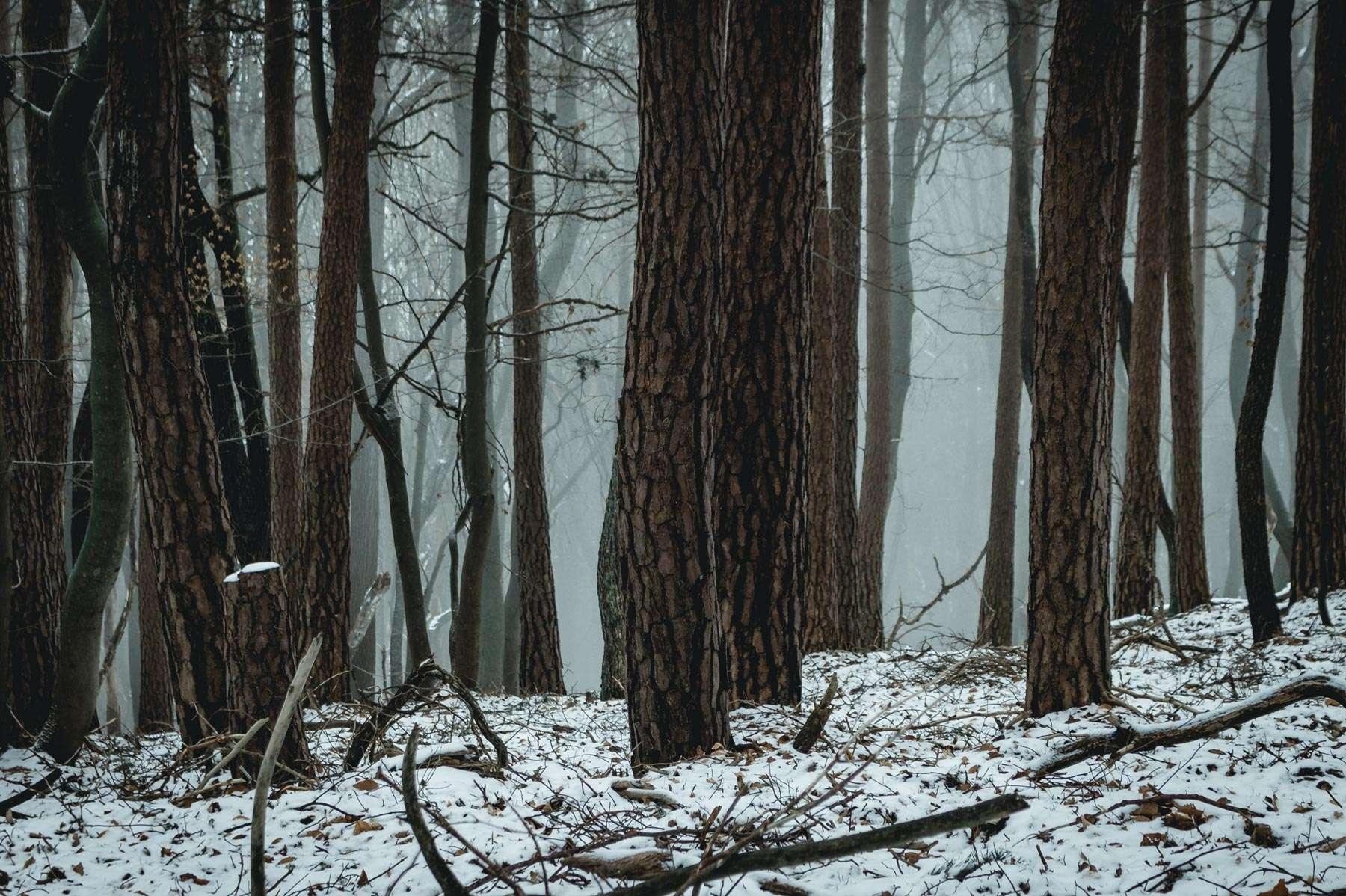 Wald in Nebelschwaden