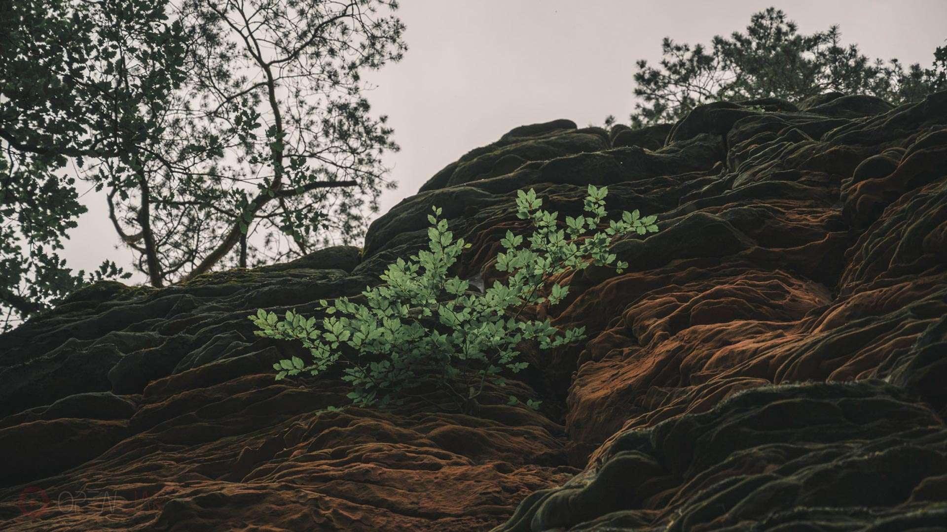 Ein Baum wächst auf einem Felsen.
